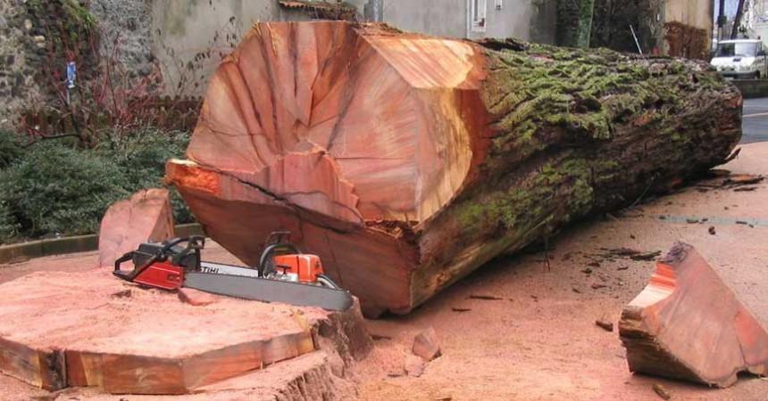 Coupe et abattage d'arbres