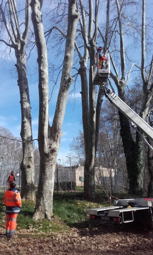 elagage arbres