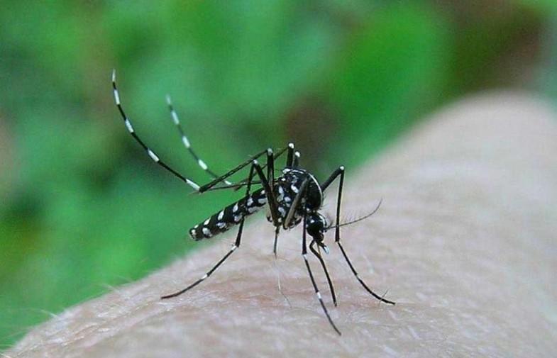 moustiques tigres / mesures