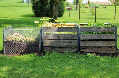 Les petits et grands avantages du compost domestique