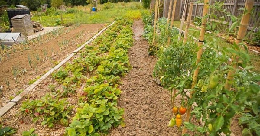 Projet de jardins partagés