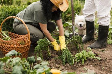 Réunion publique sur les jardins partagés – Samedi 27 mars